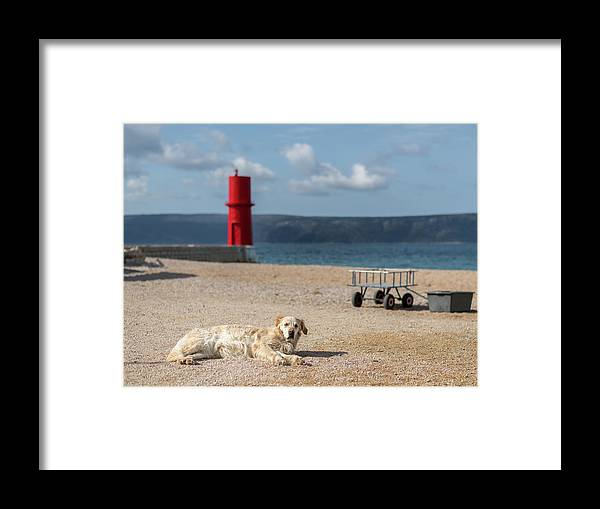 Island Framed Print featuring the photograph Dog Lying On The Beach In Front Of Red Lighthouse Of Cres by Stefan Rotter