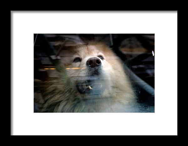 Jez C Self Framed Print featuring the photograph Dogshed by Jez C Self