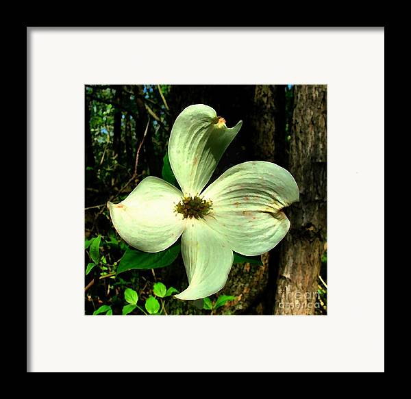 Dogwood Blossom Framed Print featuring the photograph Dogwood Blossom I by Julie Dant
