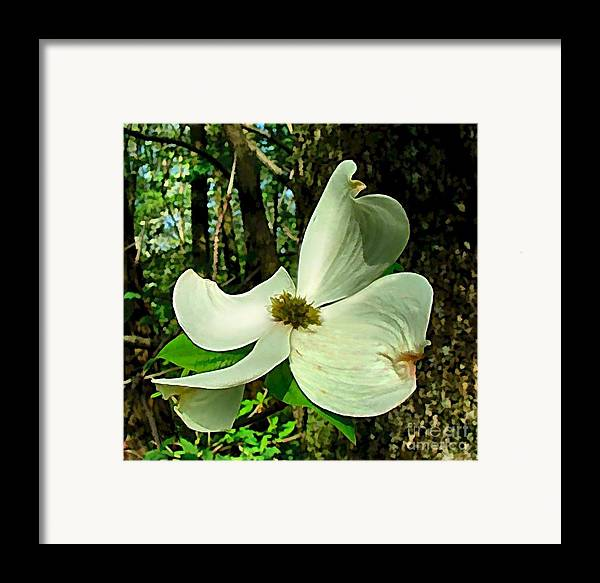 Dogwood Blossom Framed Print featuring the photograph Dogwood Blossom II by Julie Dant