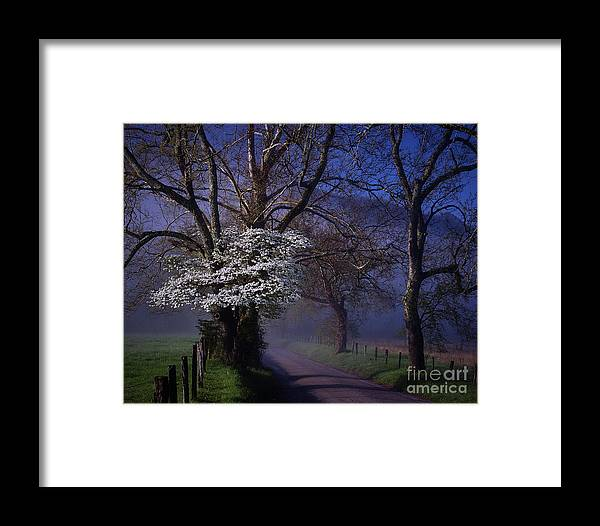 Dogwood Framed Print featuring the photograph Dogwood Morning by Stanton Tubb