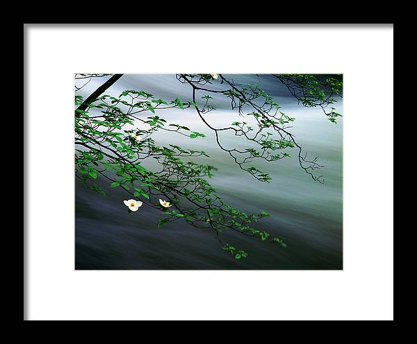 Photography Framed Print featuring the photograph Dogwoods And Merced River by Edward Mendes