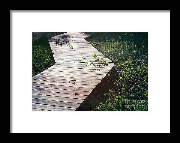 Dollarweed Framed Print featuring the photograph Dollarweed by Beth Williams