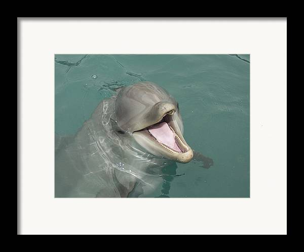 Dolphin Framed Print featuring the painting Dolphin by Sean M