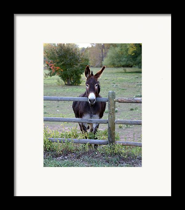 Donkey Framed Print featuring the photograph Donkey At The Fence by D Winston