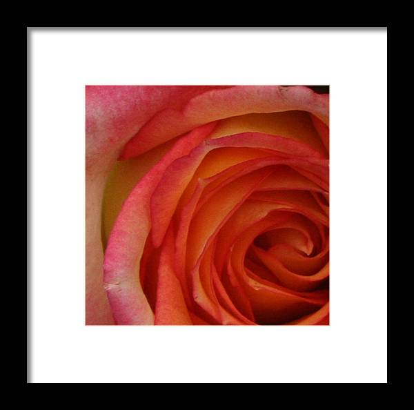 Roses Framed Print featuring the photograph Dont Speak by Diana Gonzalez