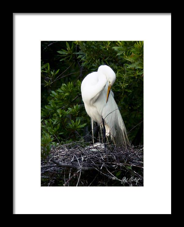 Beaufort County Framed Print featuring the photograph Doting Mother by Phill Doherty