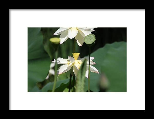 Flowers Framed Print featuring the photograph Double Blossom by Dawn Davis