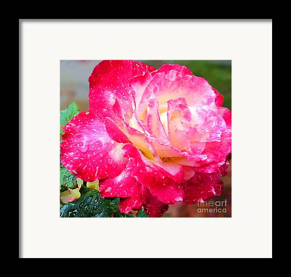 Fine Art Photography Framed Print featuring the photograph Double Delight by Patricia Griffin Brett