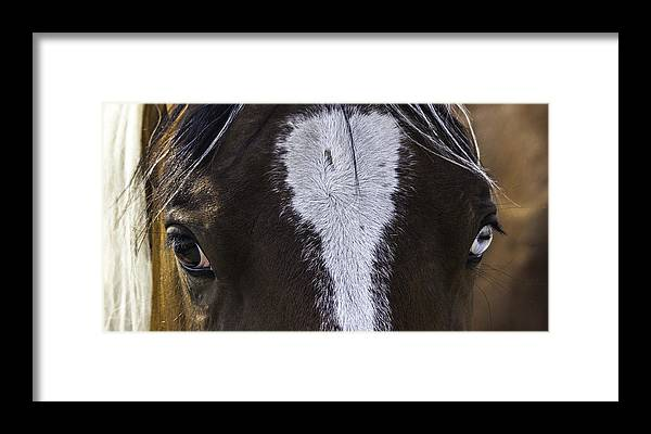 South Dakota Framed Print featuring the photograph Double Vision by Elizabeth Eldridge