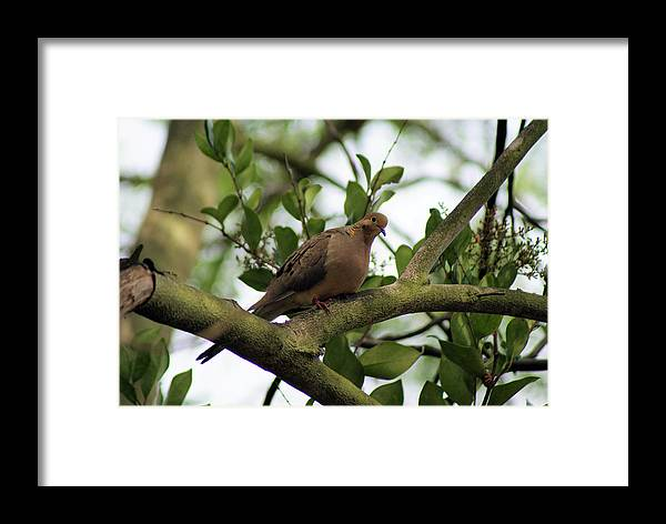 Dove Framed Print featuring the photograph Dove Bar by Ellen Lerner ODonnell
