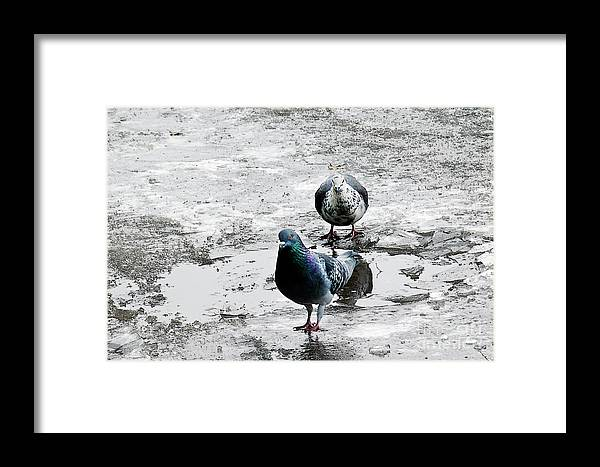 Dove Framed Print featuring the photograph Doves On The Street by Elvira Ladocki