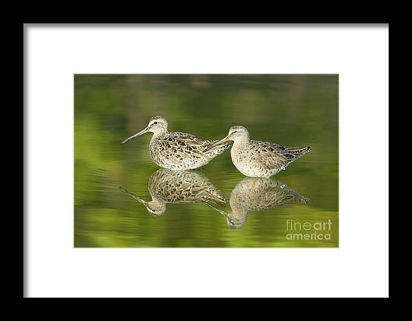 Clarence Holmes Framed Print featuring the photograph Dowitcher Reflections by Clarence Holmes