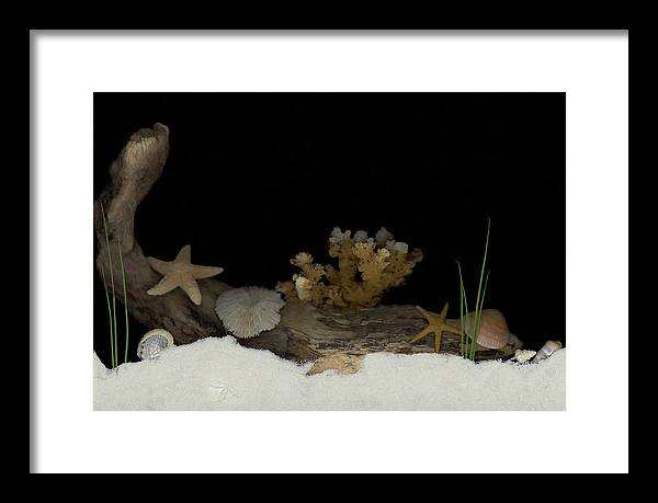 Shells Framed Print featuring the mixed media Down Under by Sandi F Hutchins