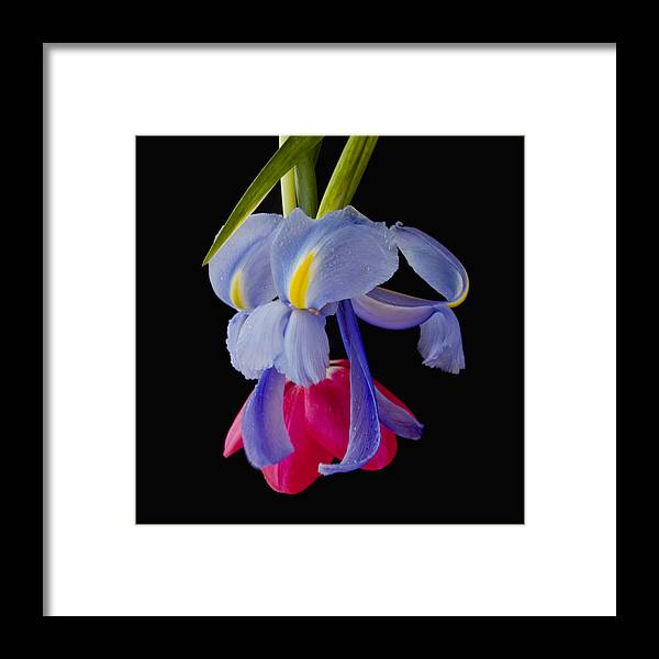 Flower Framed Print featuring the photograph Downward Dog by Katherine Morgan