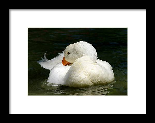Jenny Gandert Framed Print featuring the photograph Downy Soft by Jenny Gandert