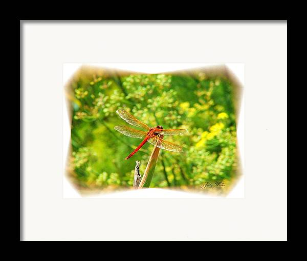 Dragon Fly Framed Print featuring the photograph Dragon Fly by Judy Waller