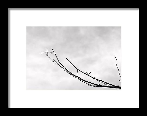 Dragon Fly Limb Framed Print featuring the photograph Dragon On A Limb by Tom Melo