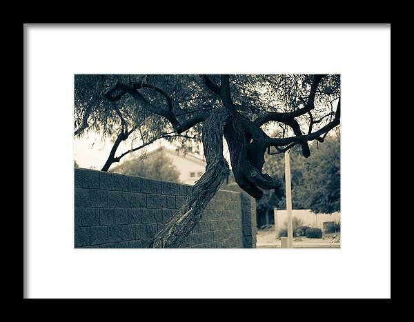 Dragon Framed Print featuring the photograph Dragon Tree by Daniel Seok