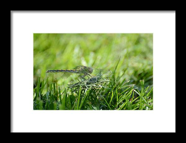Dragon Fly Framed Print featuring the photograph DragonFlly in the park by Paulina Roybal