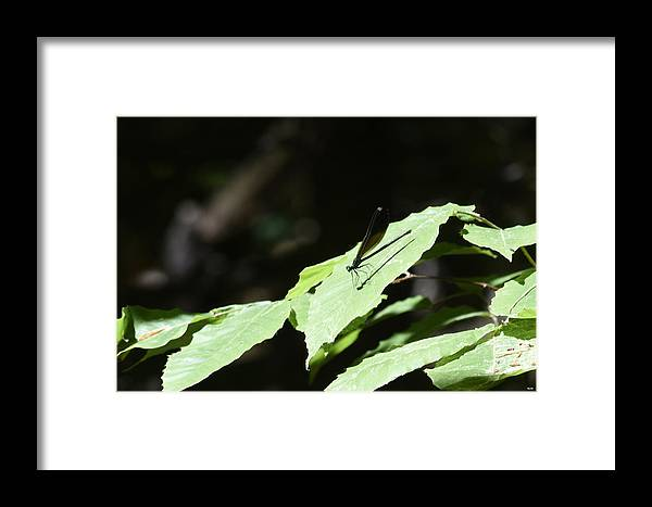 Ron Hebert Framed Print featuring the photograph Dragonfly 3 by Ron Hebert