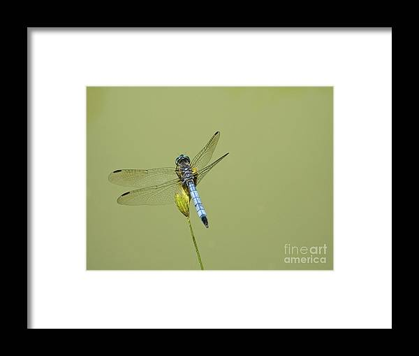 Dragonfly Framed Print featuring the photograph Dragonfly by Andrew Kazmierski