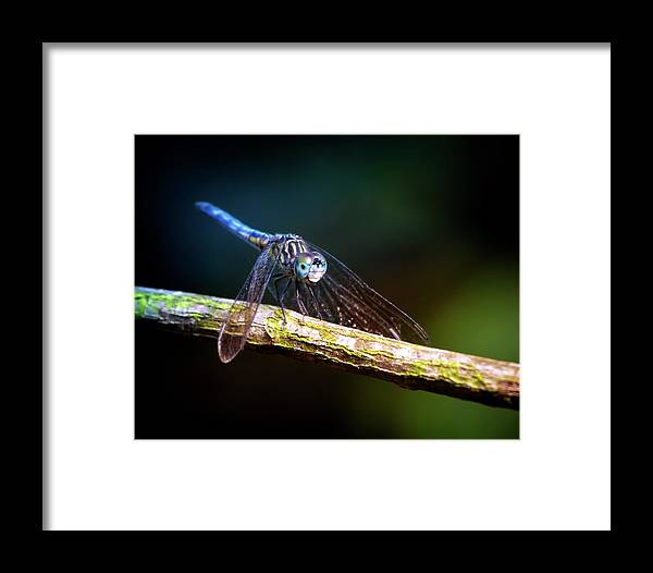 Dragonfly Framed Print featuring the photograph Dragonfly Beauty by Mark Andrew Thomas