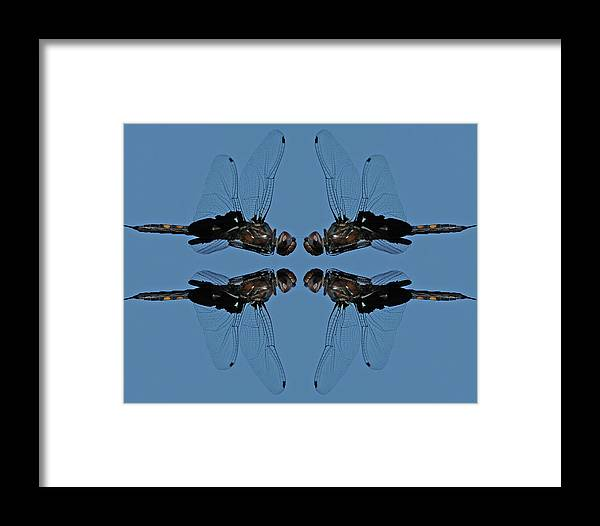 Dragonfly Framed Print featuring the photograph Dragonfly Composite Color by Mike Dickie