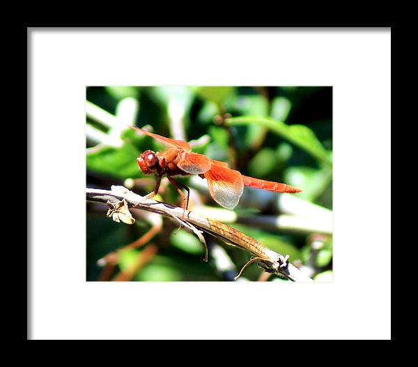 Dragonfly Framed Print featuring the photograph Dragonfly by Ellen Lerner ODonnell