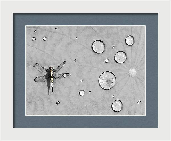 Dragonfly by Karl Manteuffel