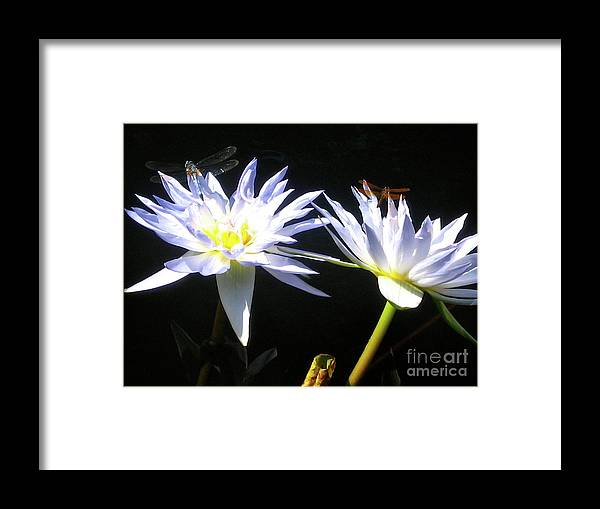 Dragonfly Framed Print featuring the photograph Dragonfly Lily by Elizabeth Donald