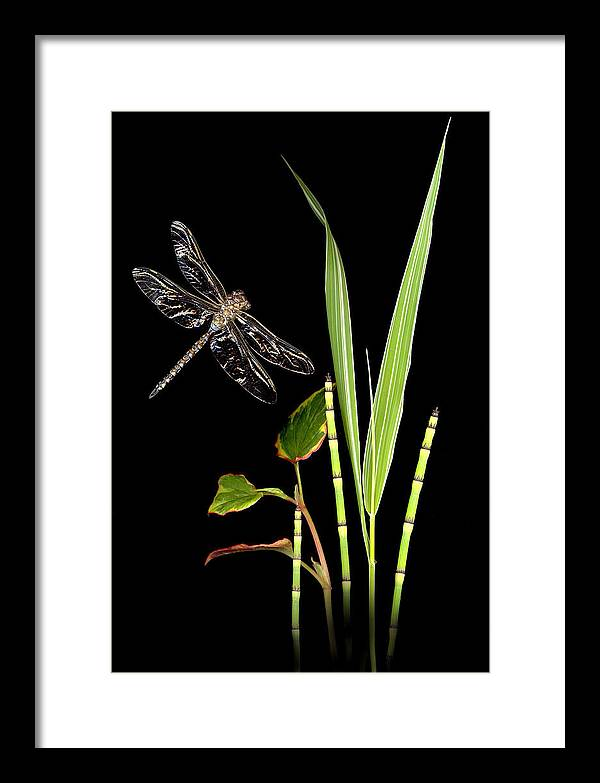Dragonfly Framed Print featuring the photograph Dragonfly Wings by Sandi F Hutchins