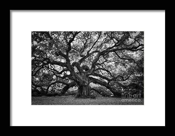 Angel Oak Framed Print featuring the photograph Dramatic Angel Oak In Black And White by Carol Groenen