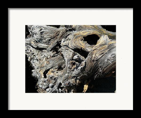 Wood Framed Print featuring the photograph Drawn Into The Wood No.8 by Stephanie H Johnson