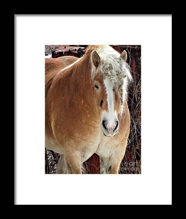Workhorse Vermont Farming Framed Print featuring the photograph Dreadlocks by Karen Velsor