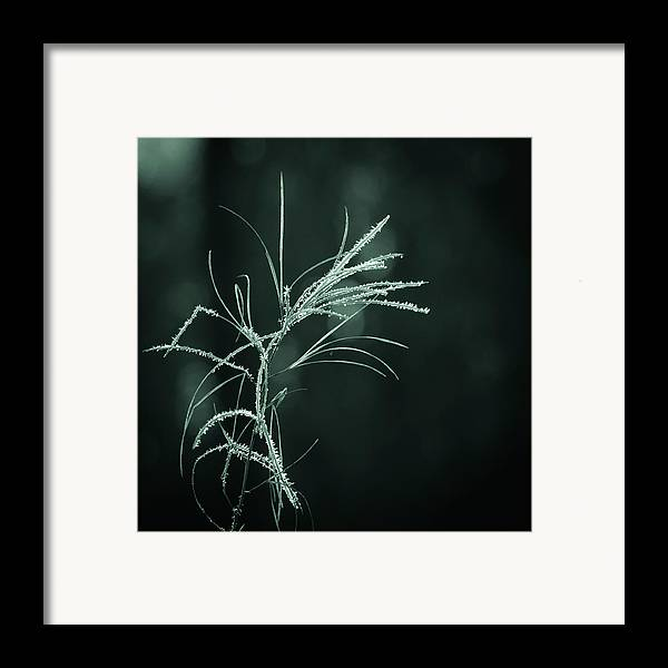 Dream Catcher Framed Print featuring the photograph Dream Catcher by Mary Amerman