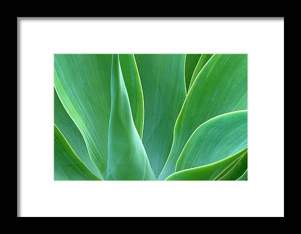 America Framed Print featuring the photograph Dream Green by Eggers Photography