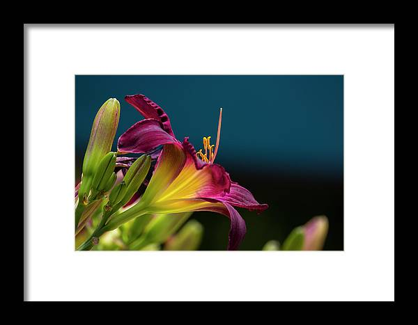 Lily Framed Print featuring the photograph Dreaming In Technicolor by Spencer Bush