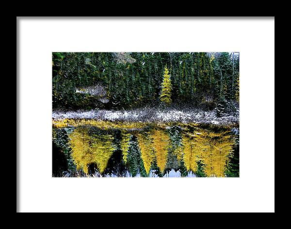 Mindscape Framed Print featuring the photograph Dreams Of A Young Tamarack by Wayne King