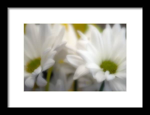 Floral Framed Print featuring the photograph Dreamy Daisies by Ayesha Lakes
