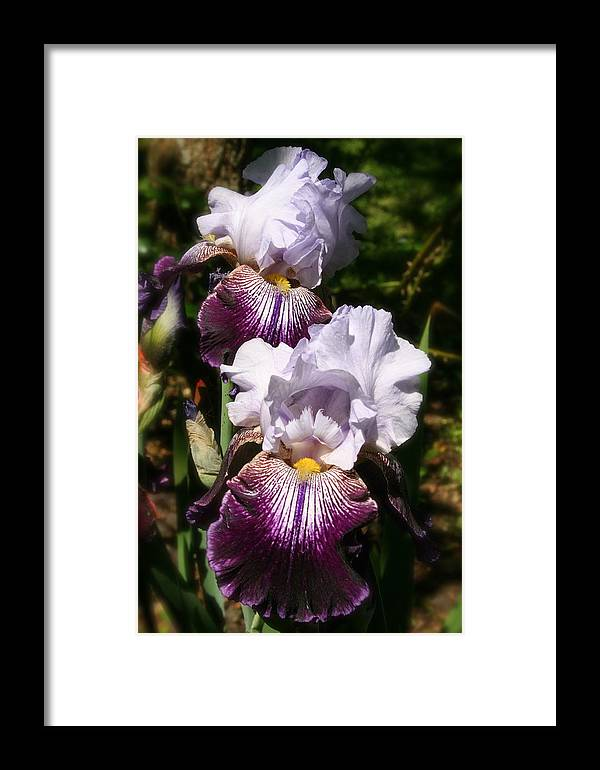 Flower Framed Print featuring the photograph Dreamy Irises by Karen Fowler