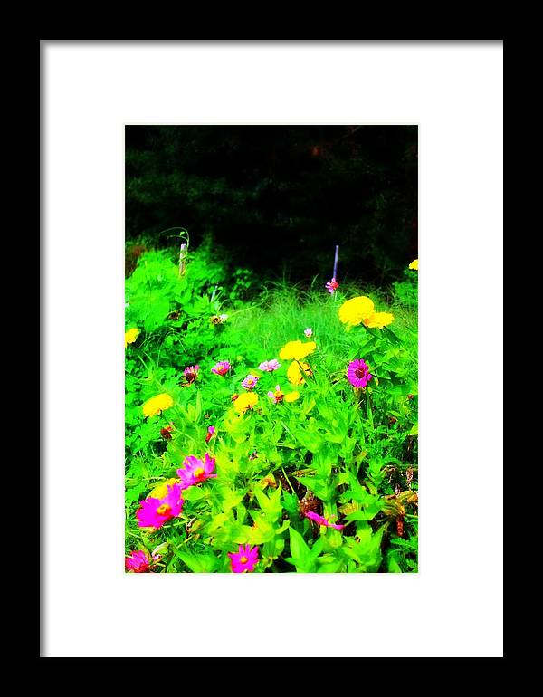 Flowers Framed Print featuring the photograph Dreamy by Jill Tennison