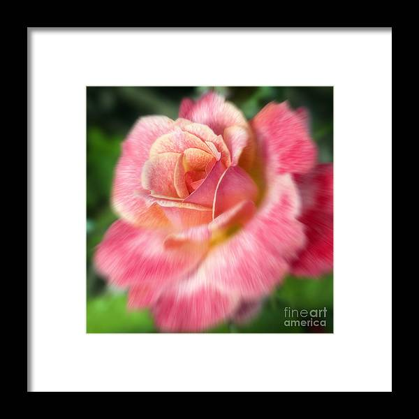 Rose Framed Print featuring the photograph Dreamy Rose by Jeannie Burleson