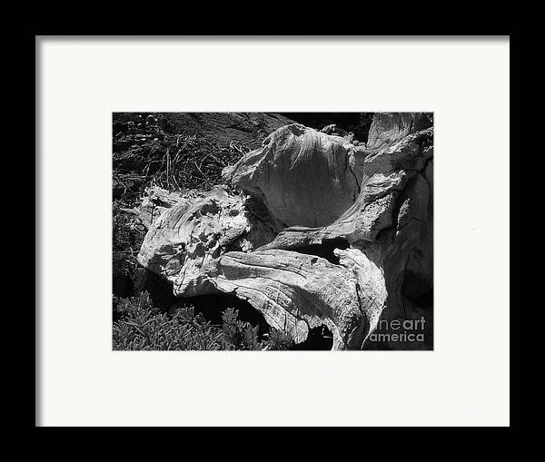 Drift Wood Framed Print featuring the photograph Drift Wood by Chad Natti