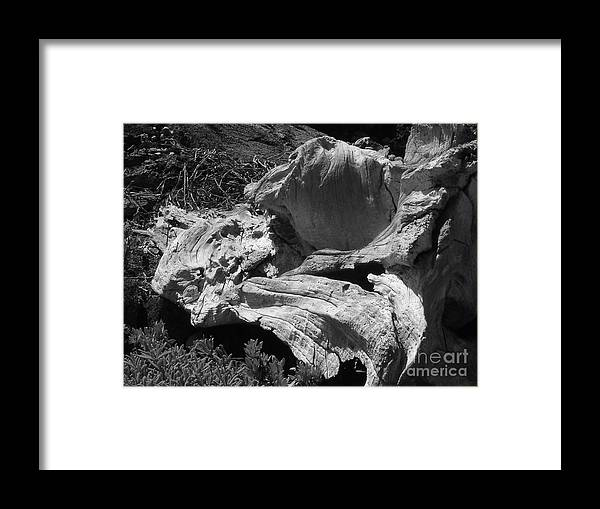 Drift Wood Framed Print featuring the photograph Drift Wood by Chad Natti