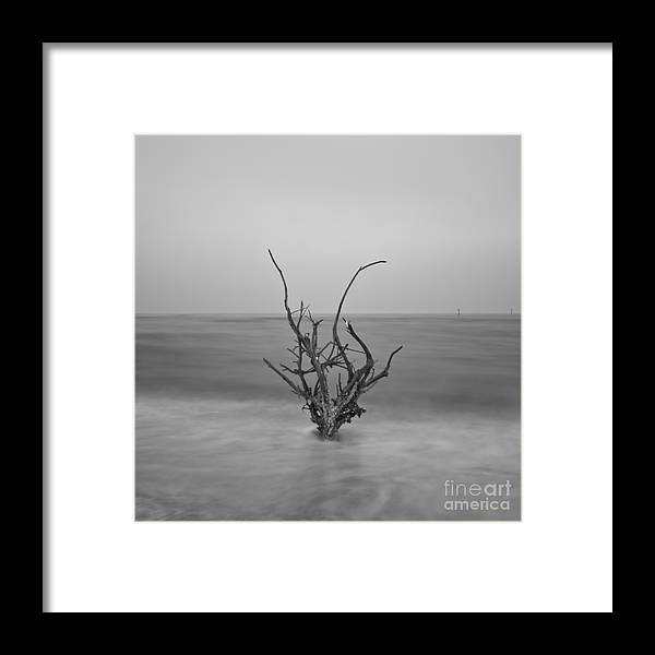 Infrared Framed Print featuring the photograph Driftwood Infrared 64 by Rolf Bertram
