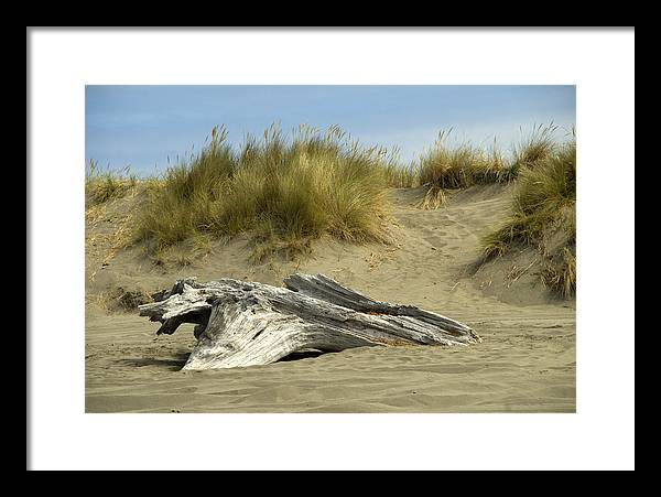 Wood Framed Print featuring the photograph Driftwood by Jessica Wakefield