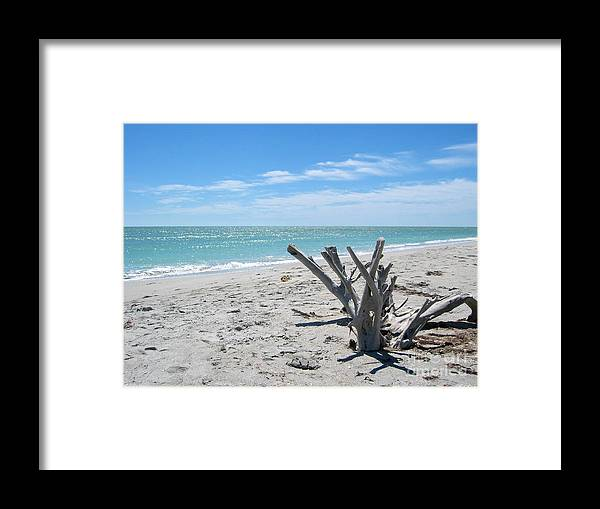 Driftwood Framed Print featuring the photograph Driftwood by Keiko Richter