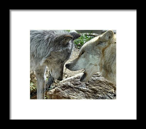 Diane Berry Framed Print featuring the photograph Druid Pack Yellowstone by Diane E Berry