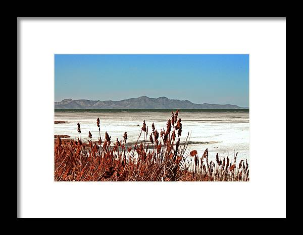 Great Framed Print featuring the photograph Dry Grasses At The Great Salt Lake by Leah Knight
